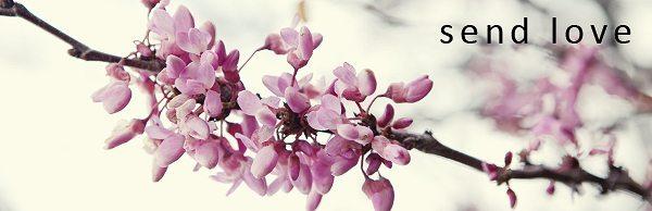 floral image taken near Malibu California