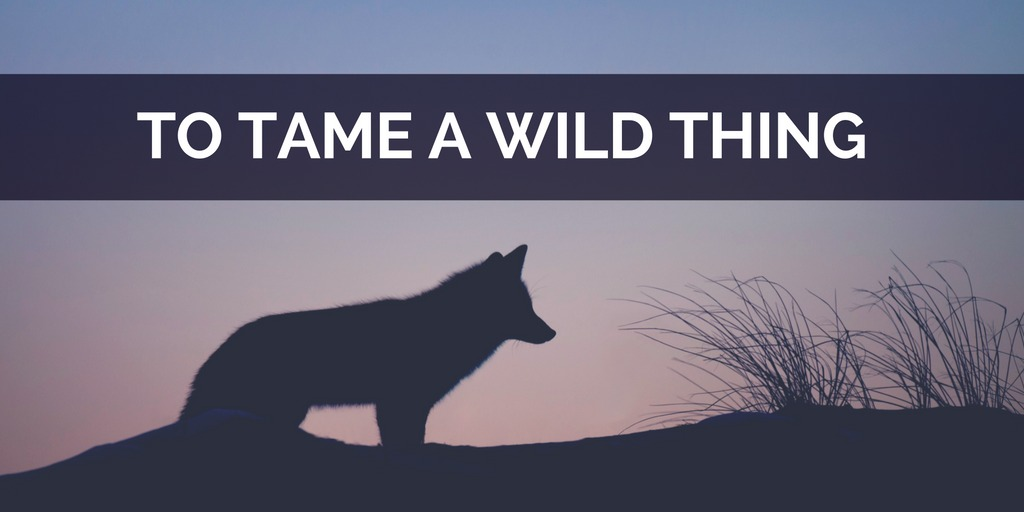 to tame a wild thing jeanette leblanc